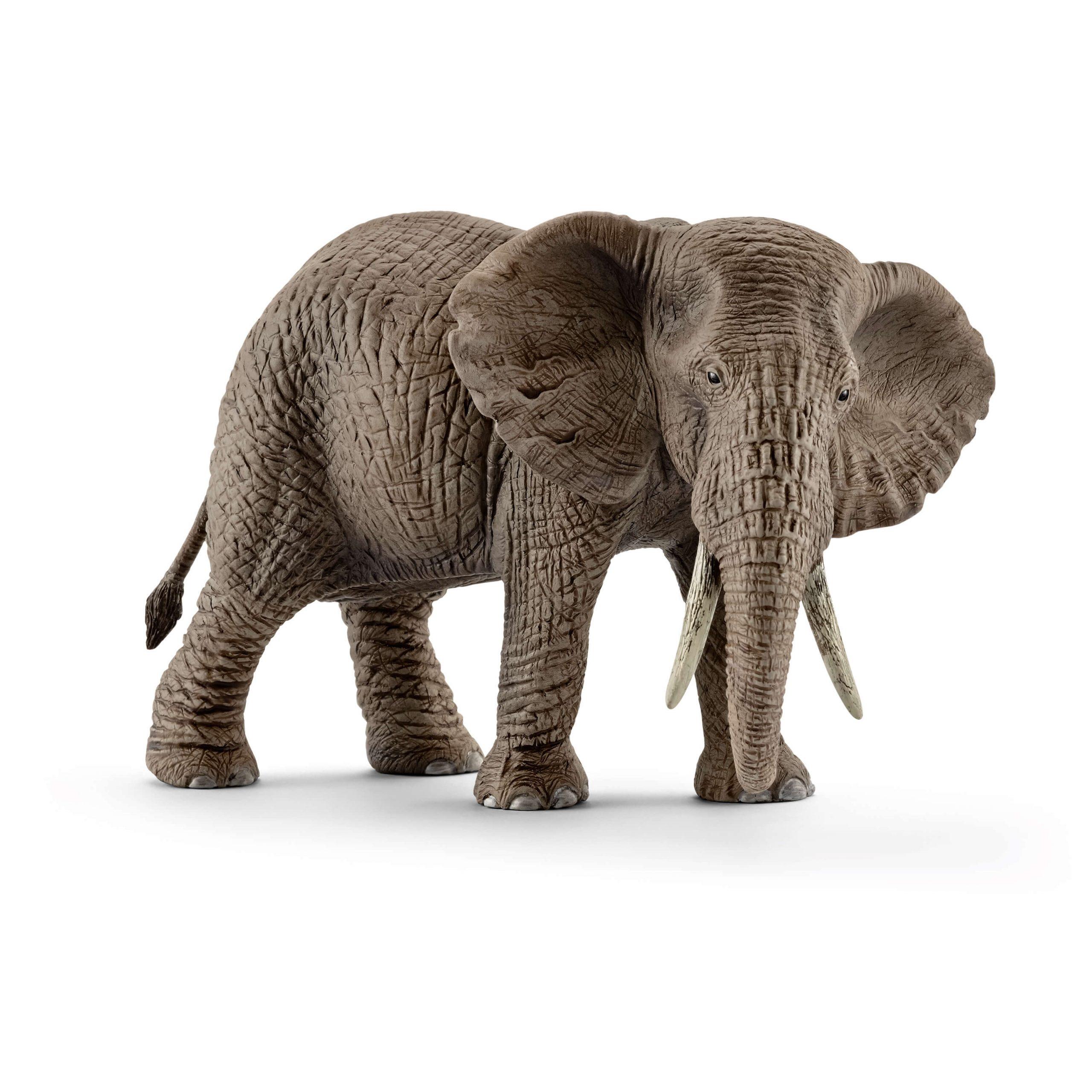 Éléphant D'afrique Femelle dedans Femelle De L Éléphant Nom