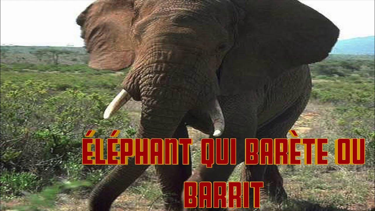 Elephant Qui Barete Ou Barrit Le Cri De L' Elephant intérieur Barrissement Elephant
