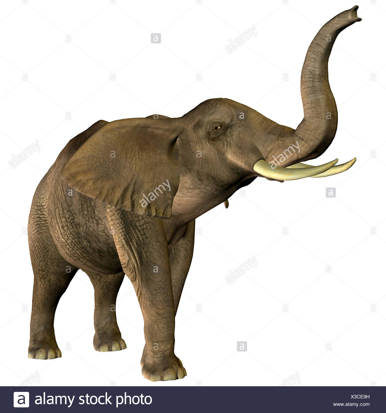 Elephant Trumpeting Stock Photos & Elephant Trumpeting Stock destiné Barrissement Elephant