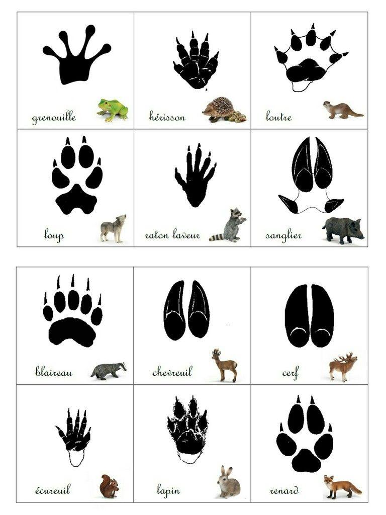 Empreintes Animaux De La Forêt | Animaux Maternelle pour Animaux Foret Maternelle