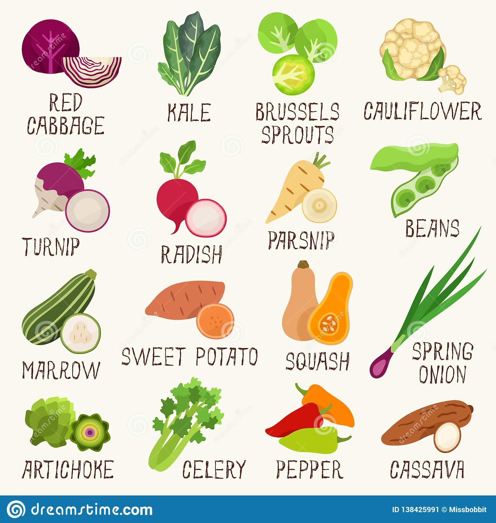 Ensemble D'illustration De Vecteur De Légumes Avec Des Noms tout Nom De Legume
