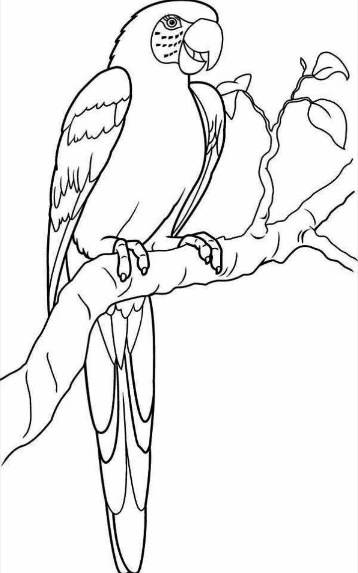 Épinglé Par Nina Yilmaz Sur Oiseaux | Coloriage Perroquet concernant Perroquet Coloriage A Imprimer