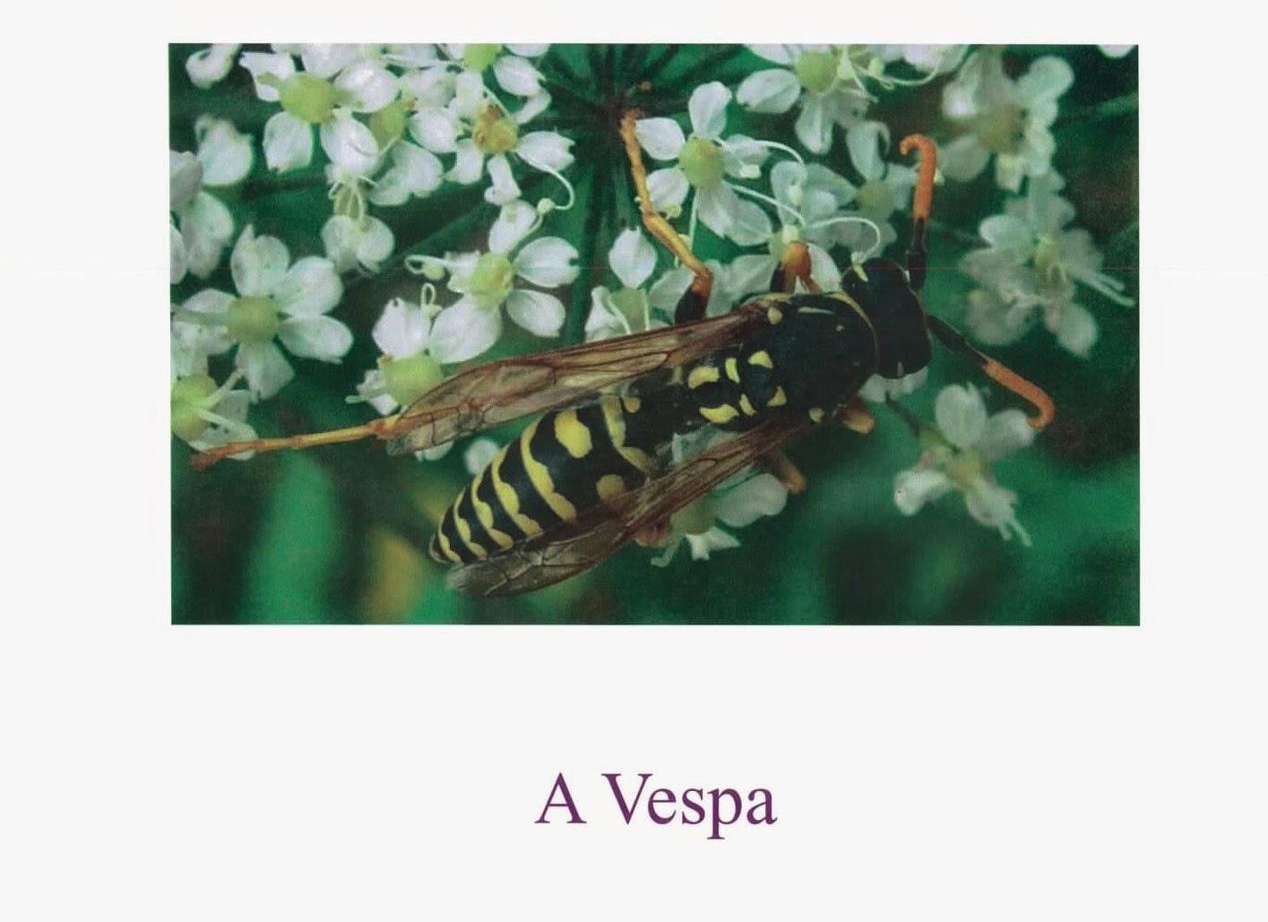 Epn Folelli: Imagier Insectes En Langue Corse serapportantà Imagier Insectes