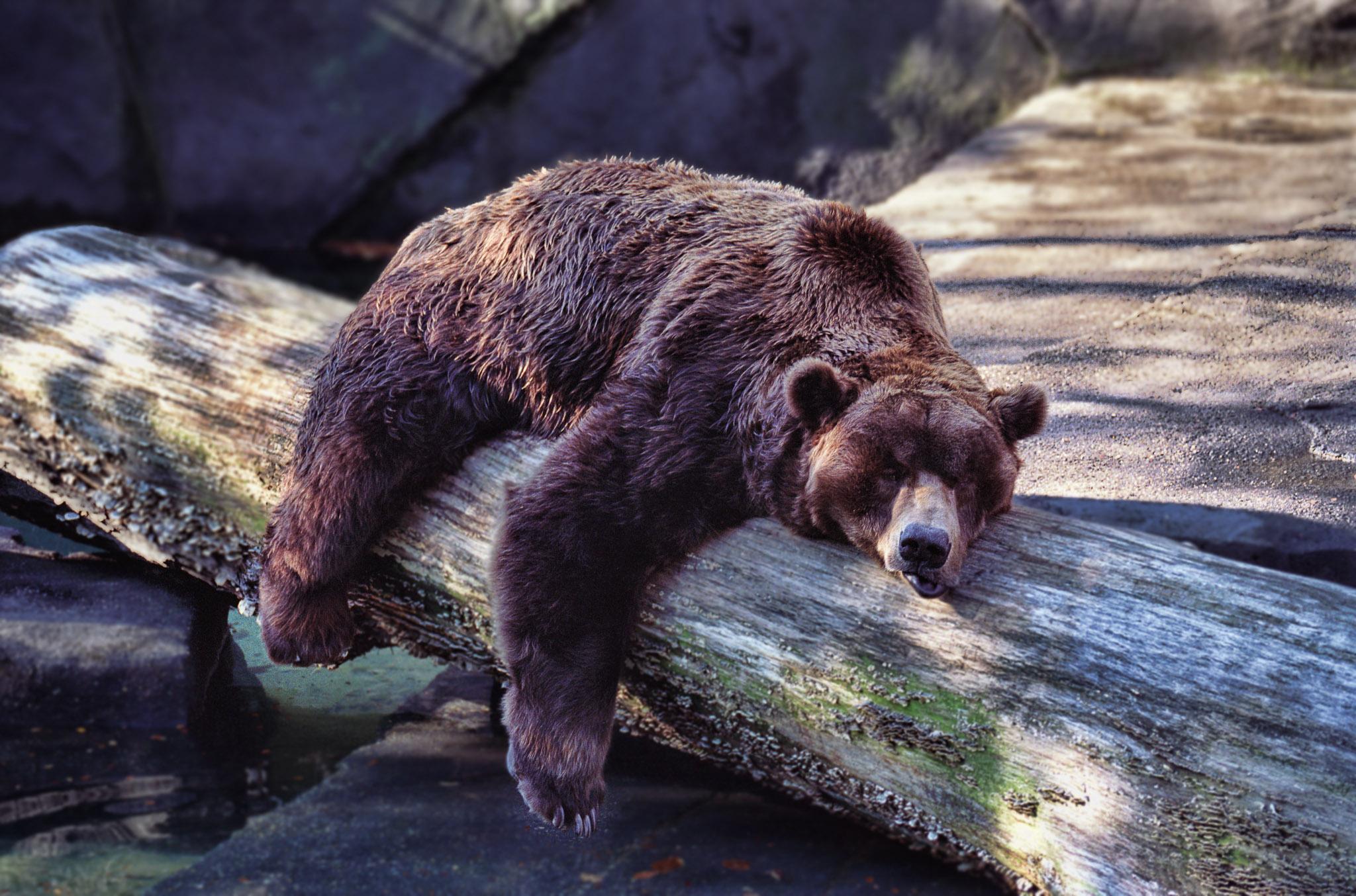 Et Si L'hibernation Permettait De Percer Le Secret De L avec Animaux Qui Hivernent