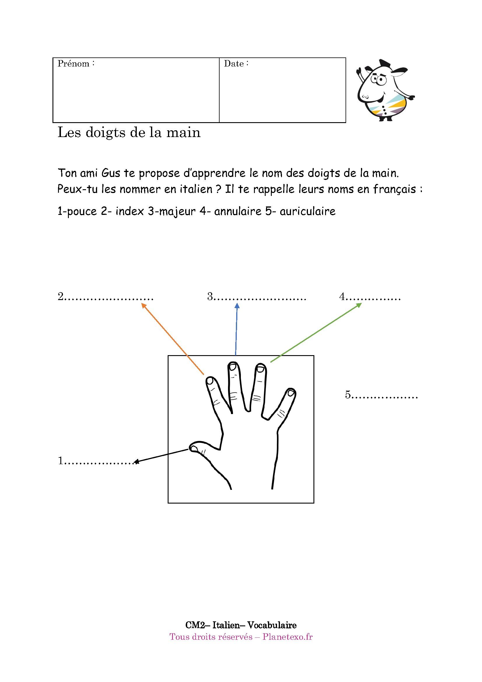 Exercice Corrigé Pour Le Cm2 : Les Doigts De La Main intérieur Nom Des Doigts De La Main