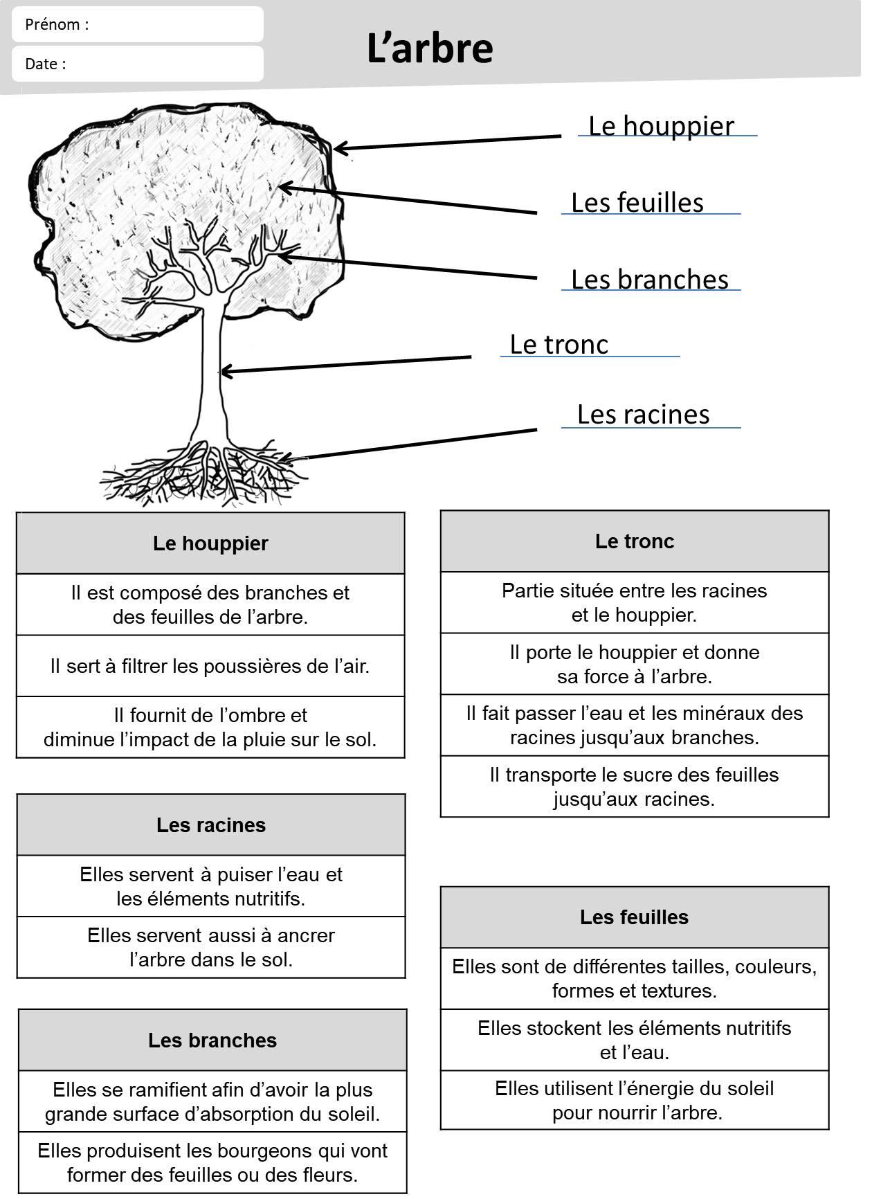 Exercices Feuille Et Arbre - Loustics encequiconcerne Fiche D Exercice Cp