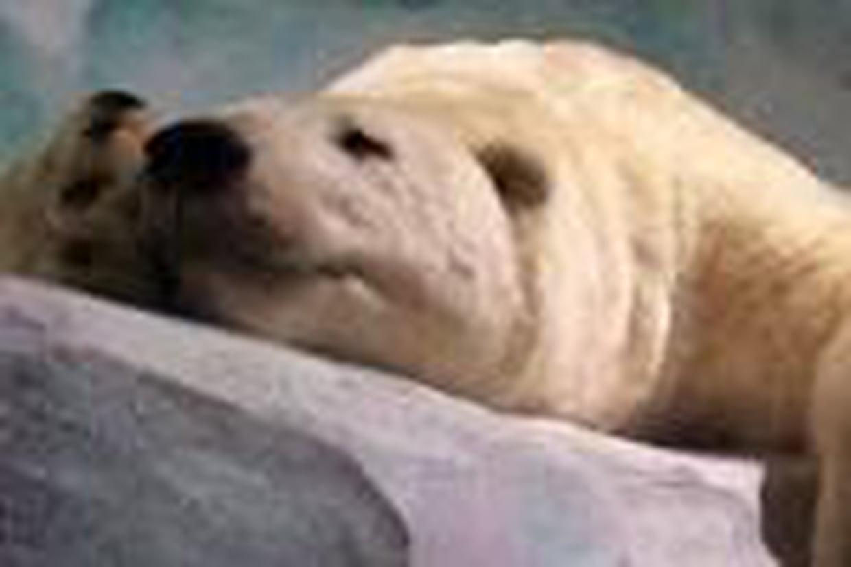 Expliquez-Moi La Différence Entre Hibernation Et Hivernation ? à Animaux Qui Hivernent