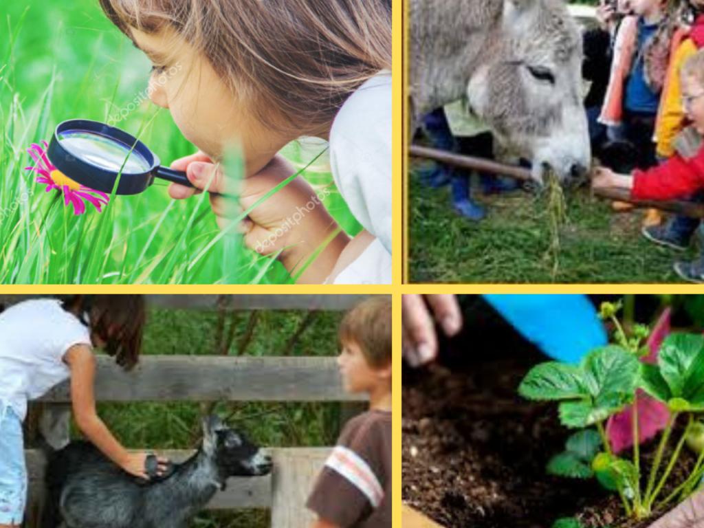 Ferme Pédagogique Espoir Nature - Loubillé - Visites concernant Activité Manuelle Sur La Ferme