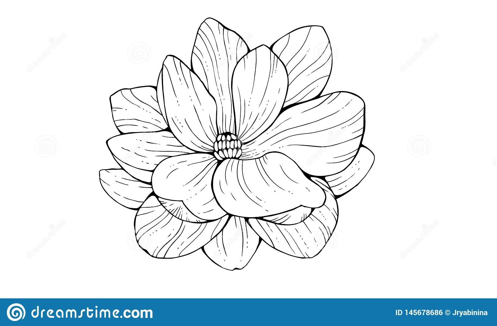 Fleur De Magnolia Dans Le Style De Découpe D'isolement Sur pour Fleurs À Découper