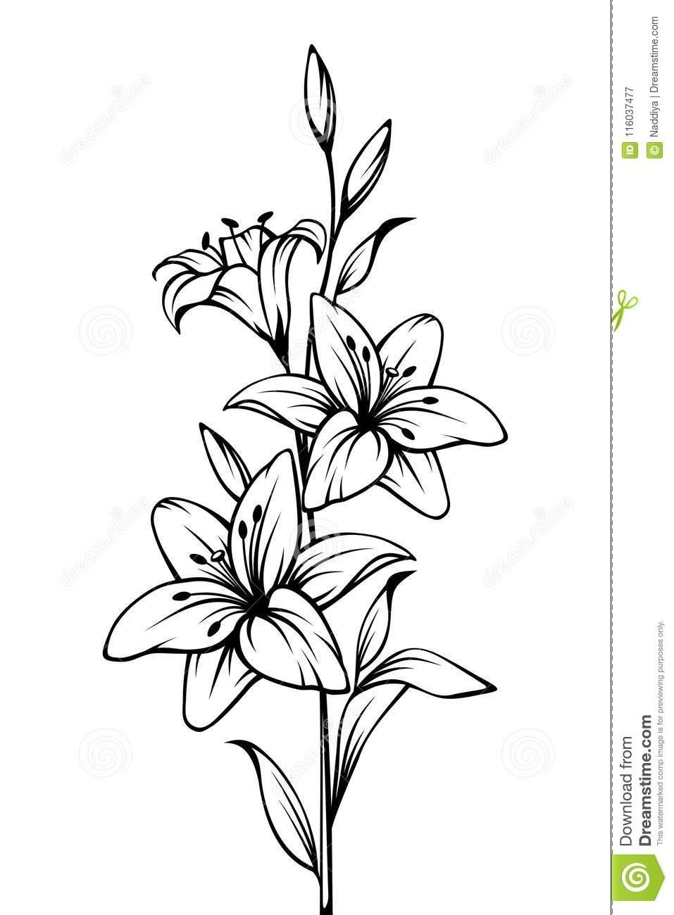 Fleurs De Lis Dessin Noir Et Blanc De Découpe De Vecteur encequiconcerne Fleurs À Découper