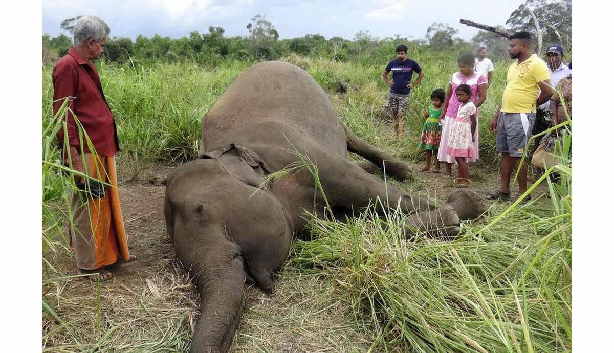 France-Monde | Sept Éléphants Découverts Morts, Sans Doute avec Femelle De L Éléphant Nom