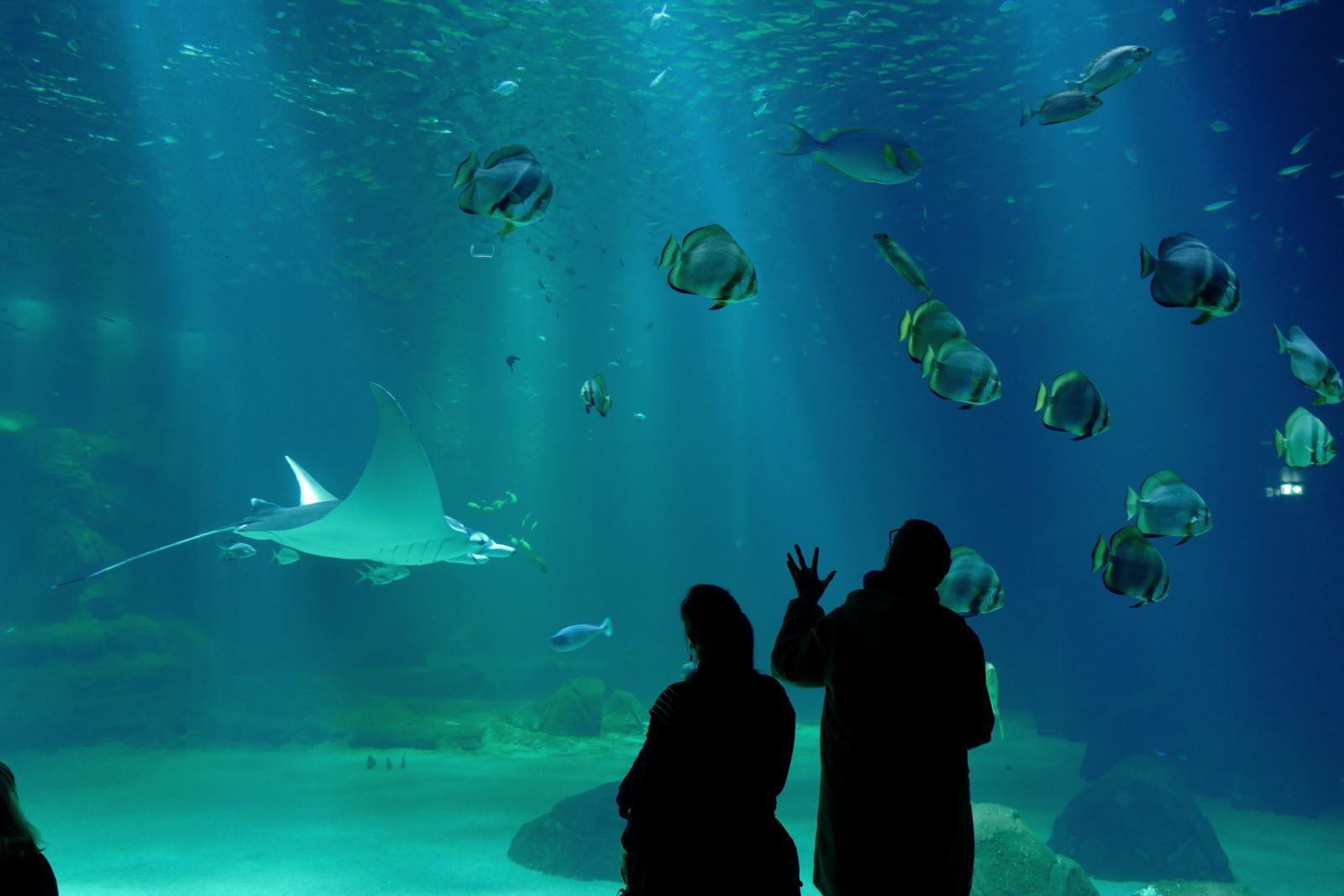 France-Monde | Tous Les Requins-Marteaux De L'aquarium tout Tous Les Jeux De Requin