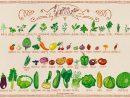 Fruits Et Légumes De Juillet à Nom Legume