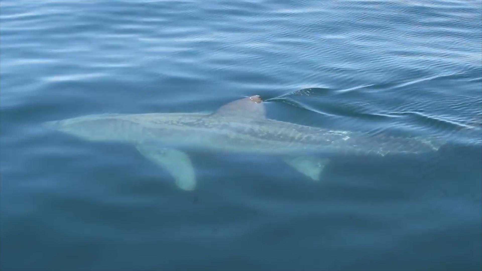 Geants Du Profondeur - Requins avec Requin Souris