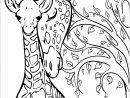 Girafes : Bébé Et Maman - Girafes - Coloriages Difficiles concernant Coloriage Bébé Tigre