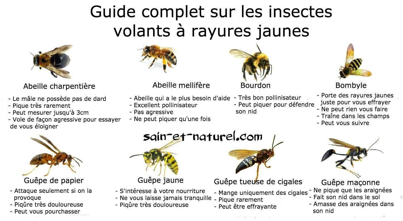 Guide Complet Sur Les Insectes Volants À Rayures Jaunes destiné Imagier Insectes