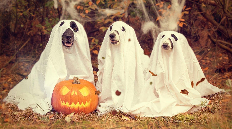 Halloween À Bordeaux - Frissons Garantis - Un Air De Bordeaux avec Jeux D Halloween Gratuit