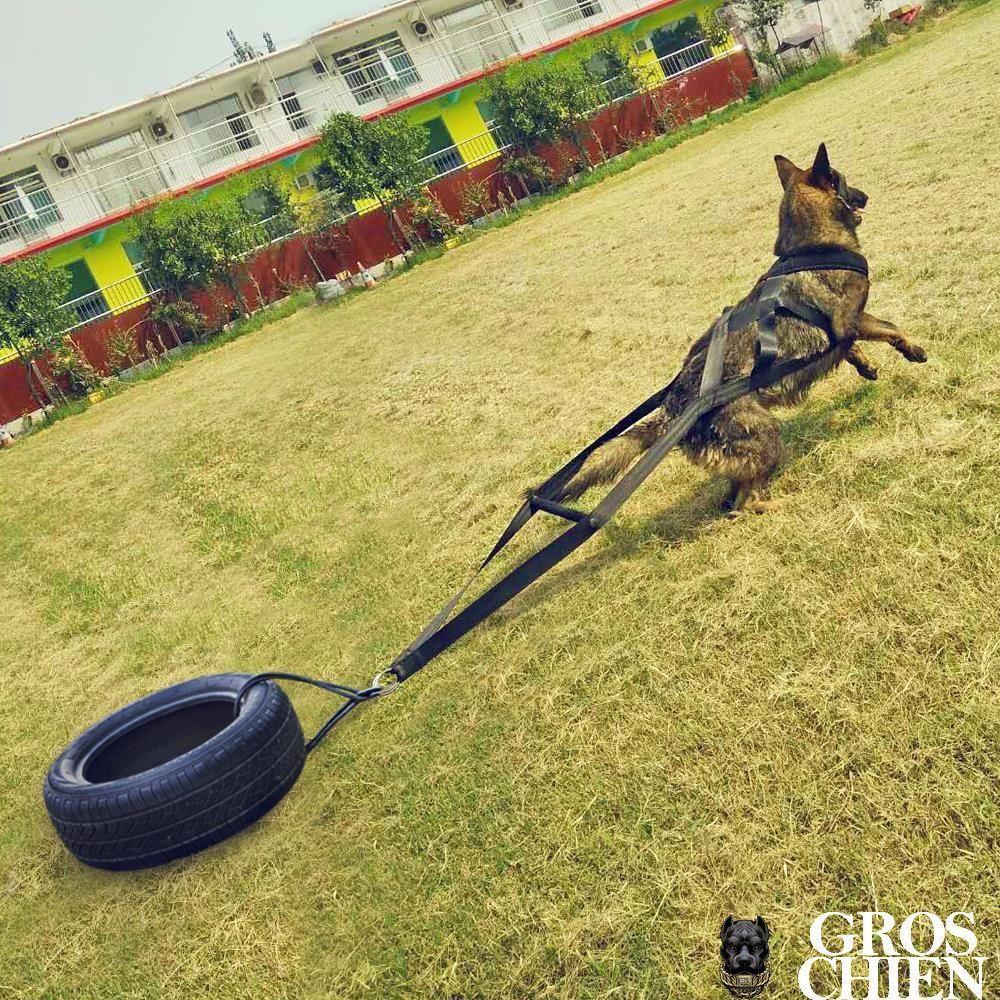 Harnais Traction Chien Sport Canin | Harnais Chien, Chien concernant Chien Qui Fait De La Luge