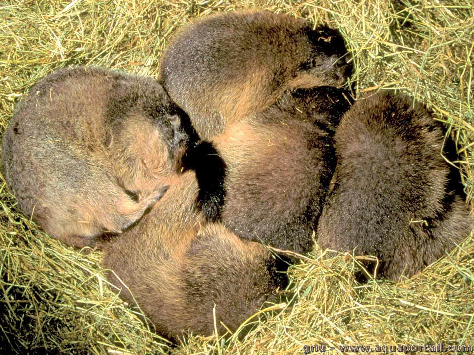 Hibernation: Définition Et Explications destiné Animaux Qui Hivernent
