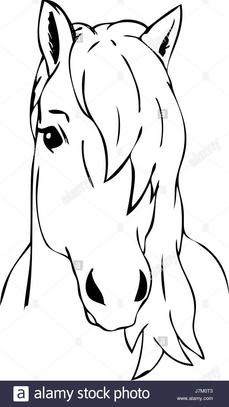 Illustration Couleur Peinture Dessiner Cartoon Art Cheval avec Cheval Dessin Couleur
