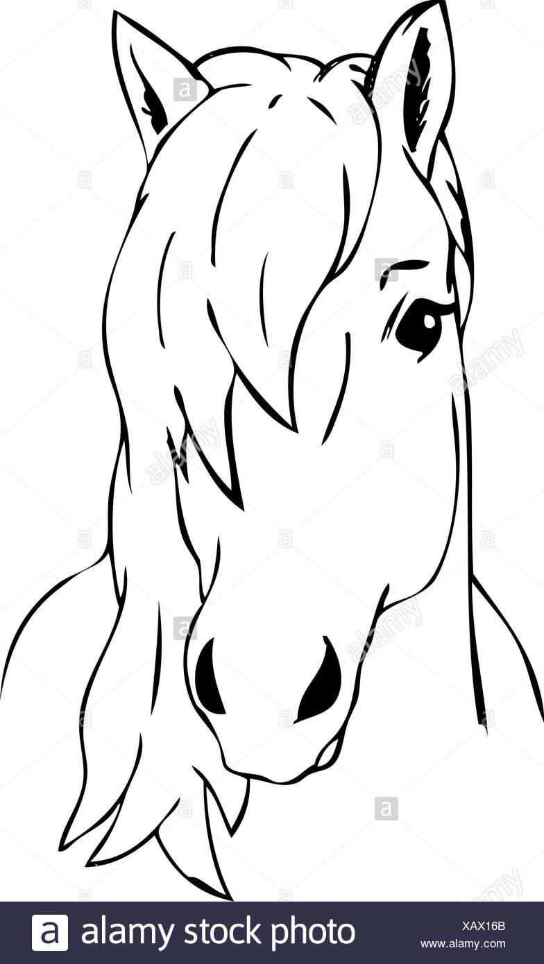 Illustration Couleur Peinture Dessiner Cartoon Art Cheval concernant Cheval Dessin Couleur