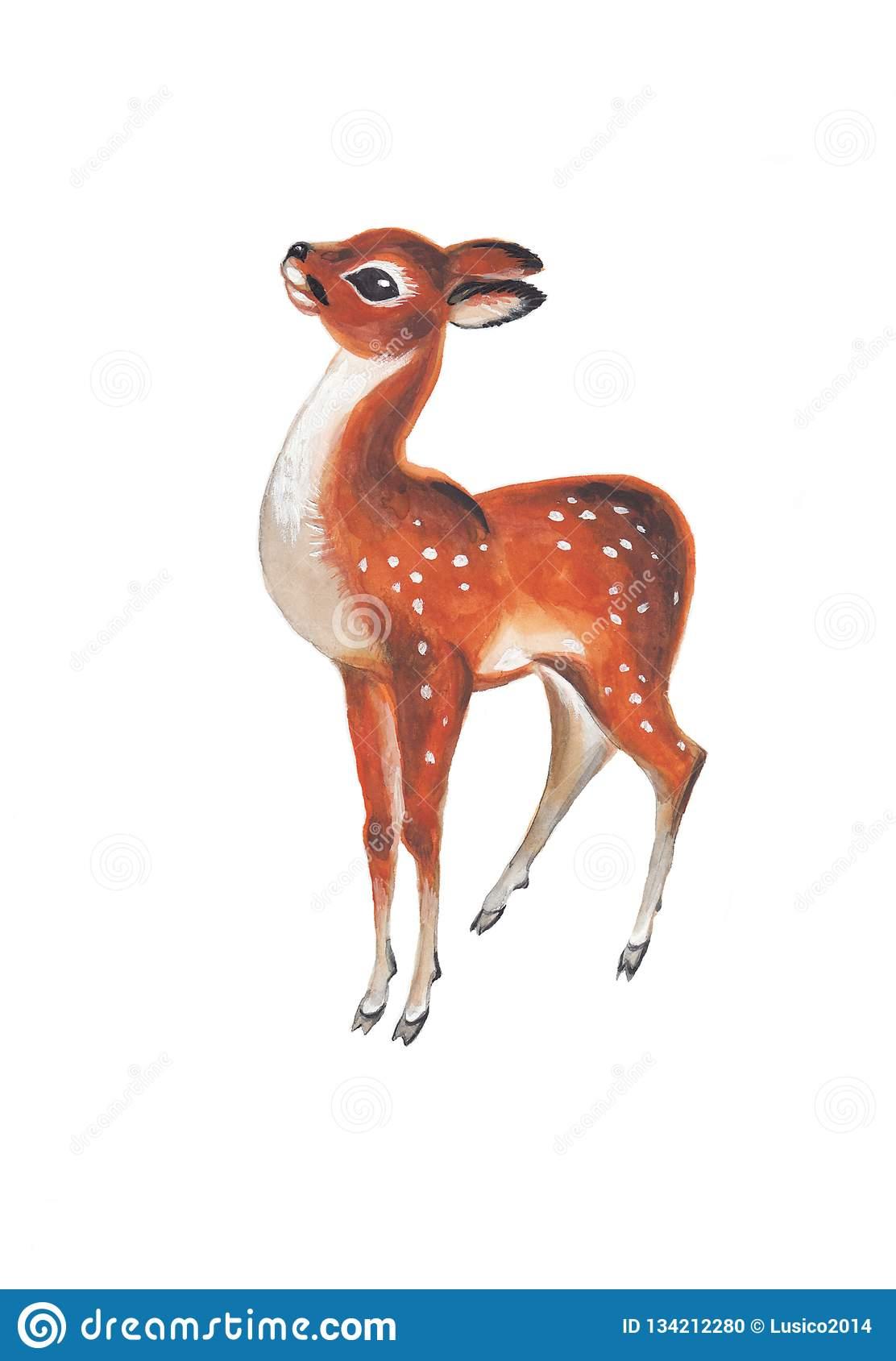 Illustration De Zoo D'aquarelle De Faon Illustration Stock dedans Faon Dessin