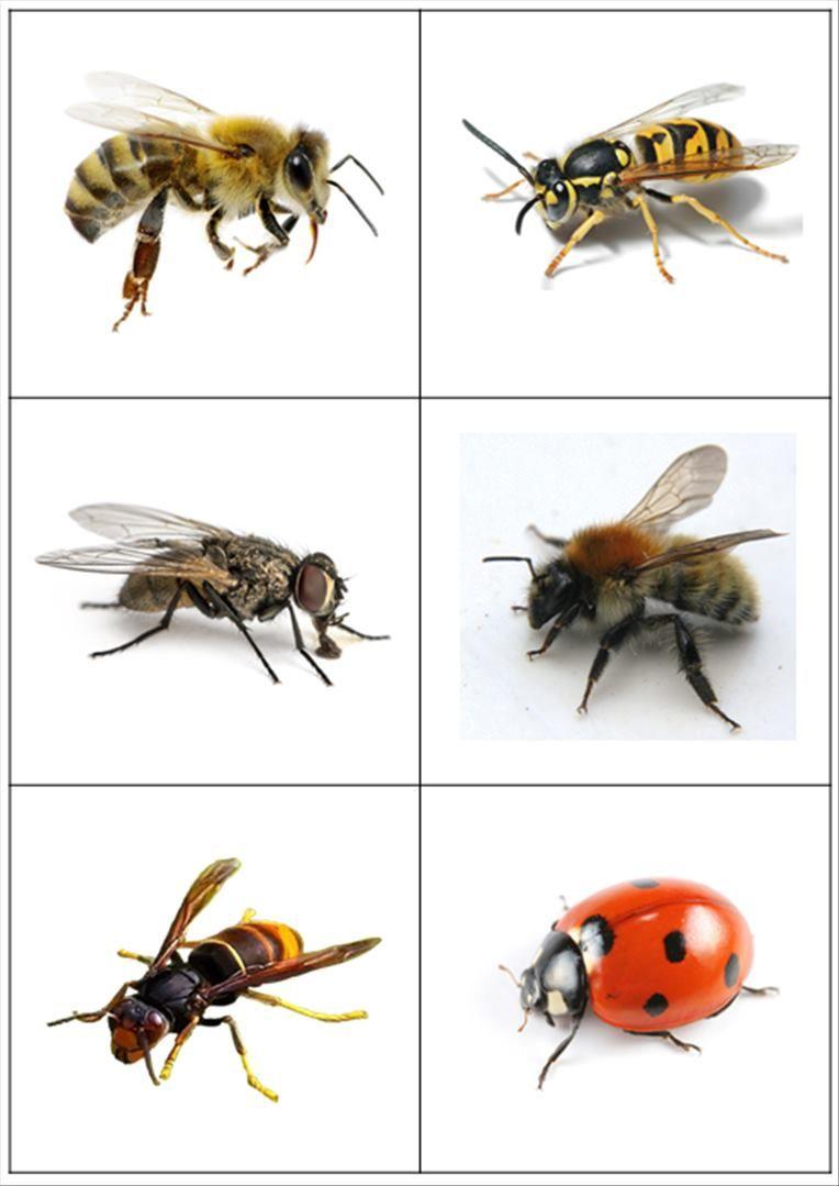 Images Classifiées - Insectes Et Petites Bêtes (Loustics avec Imagier Insectes