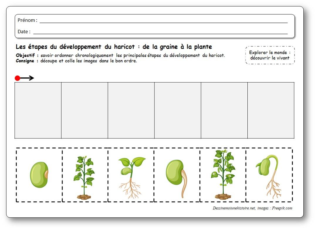 Images Séquentielles : De La Graine À La Plante De Haricot tout Images Séquentielles À Imprimer