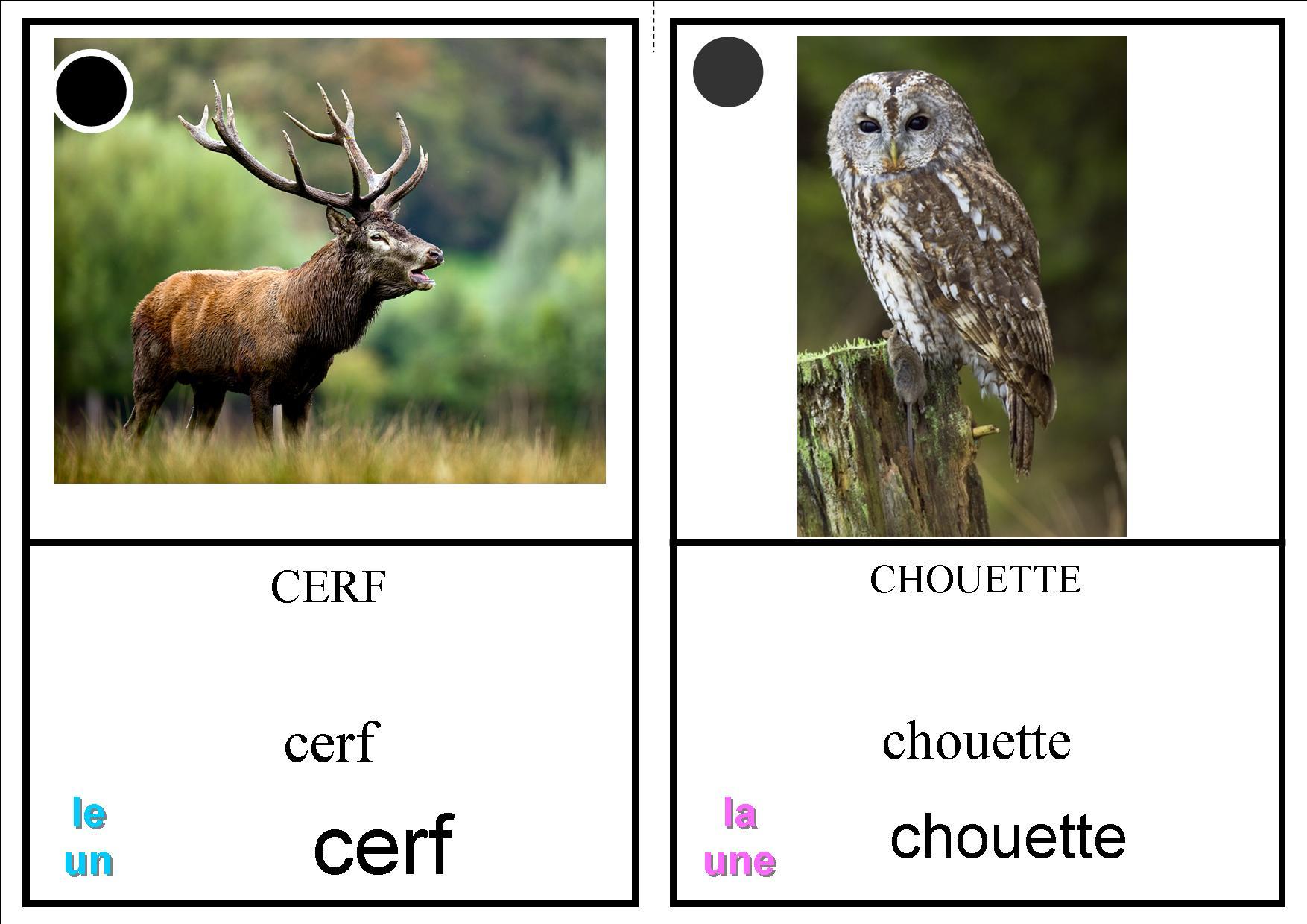 Imagier Animaux Forêt - La Classe Des Petits Moyens dedans Animaux Foret Maternelle