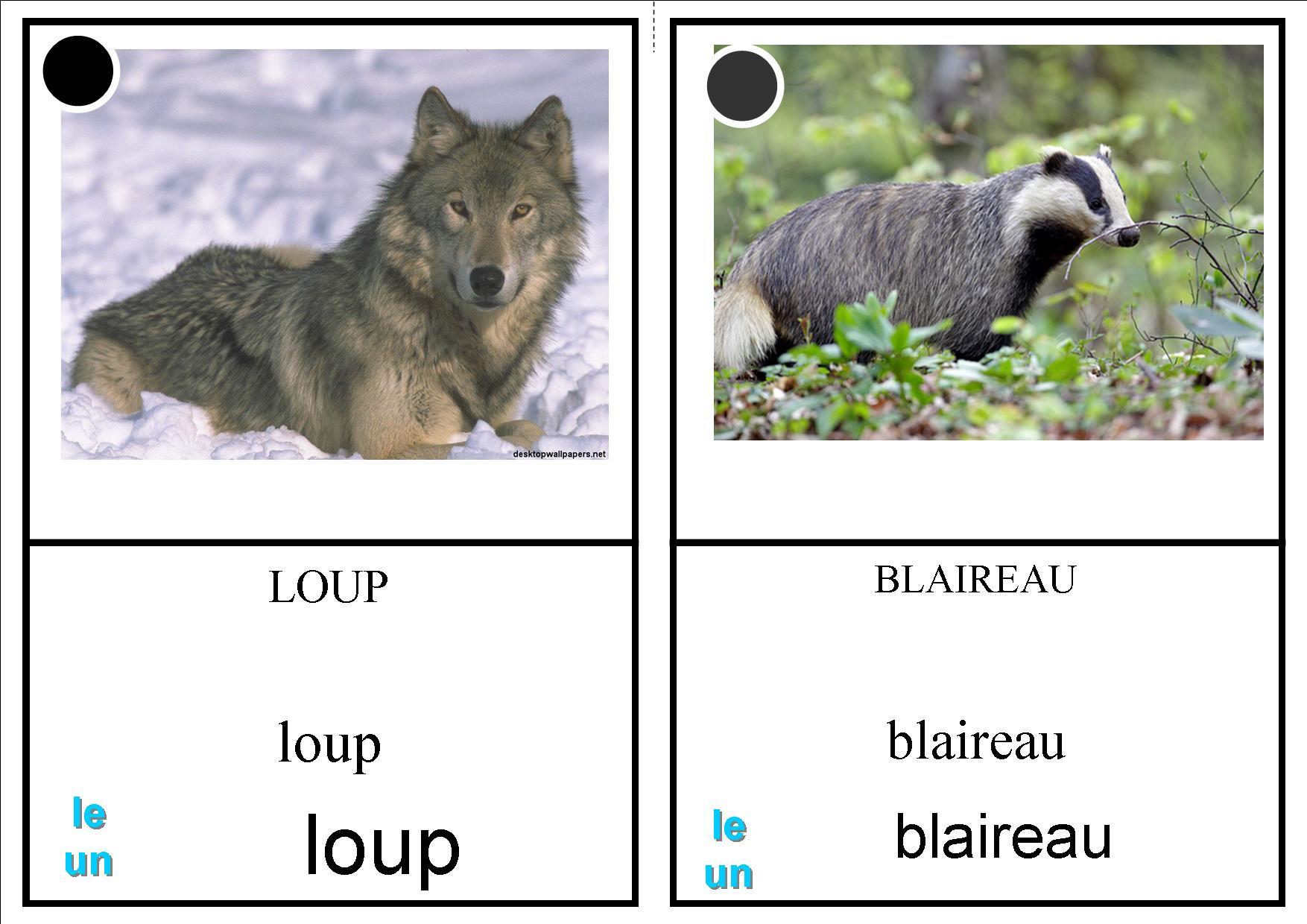 Imagier Animaux Forêt - La Classe Des Petits Moyens encequiconcerne Animaux Foret Maternelle