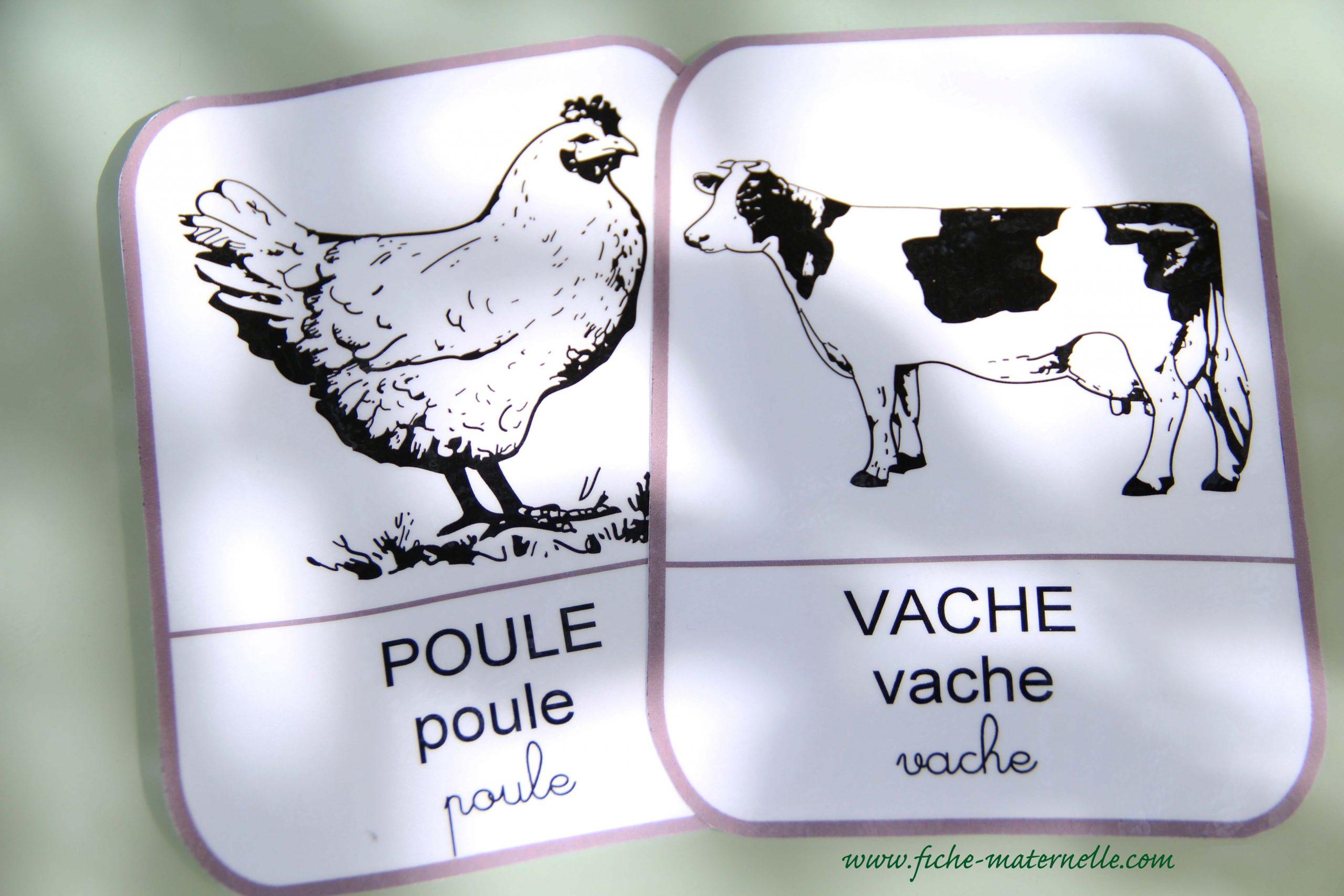Imagier De La Ferme à Imagier Animaux De La Ferme