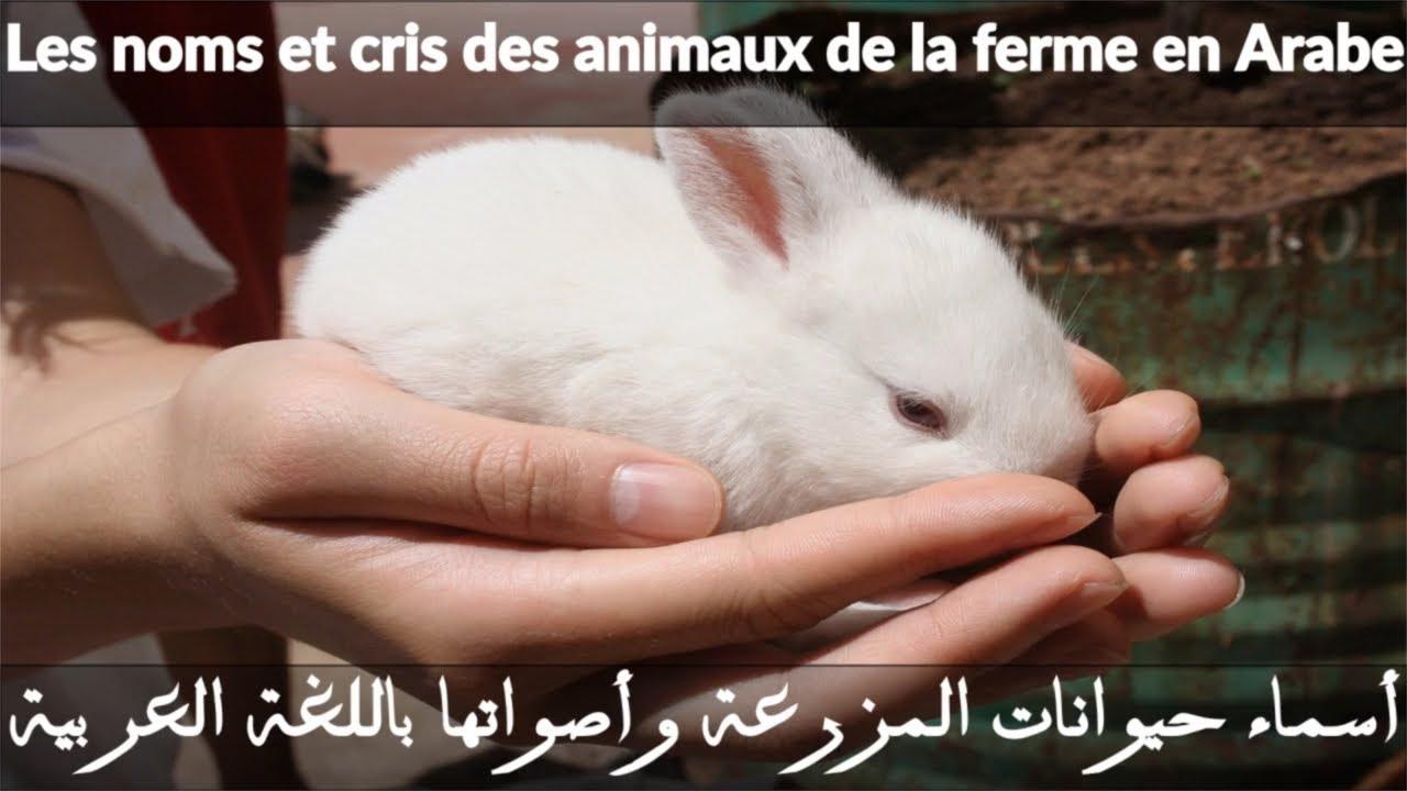 J'apprend Les Animaux De La Ferme Et Leurs Cris En Arabe Pour Bébé, Les  Noms Des Animaux En Arabe, L à Bruit Des Animaux De La Ferme