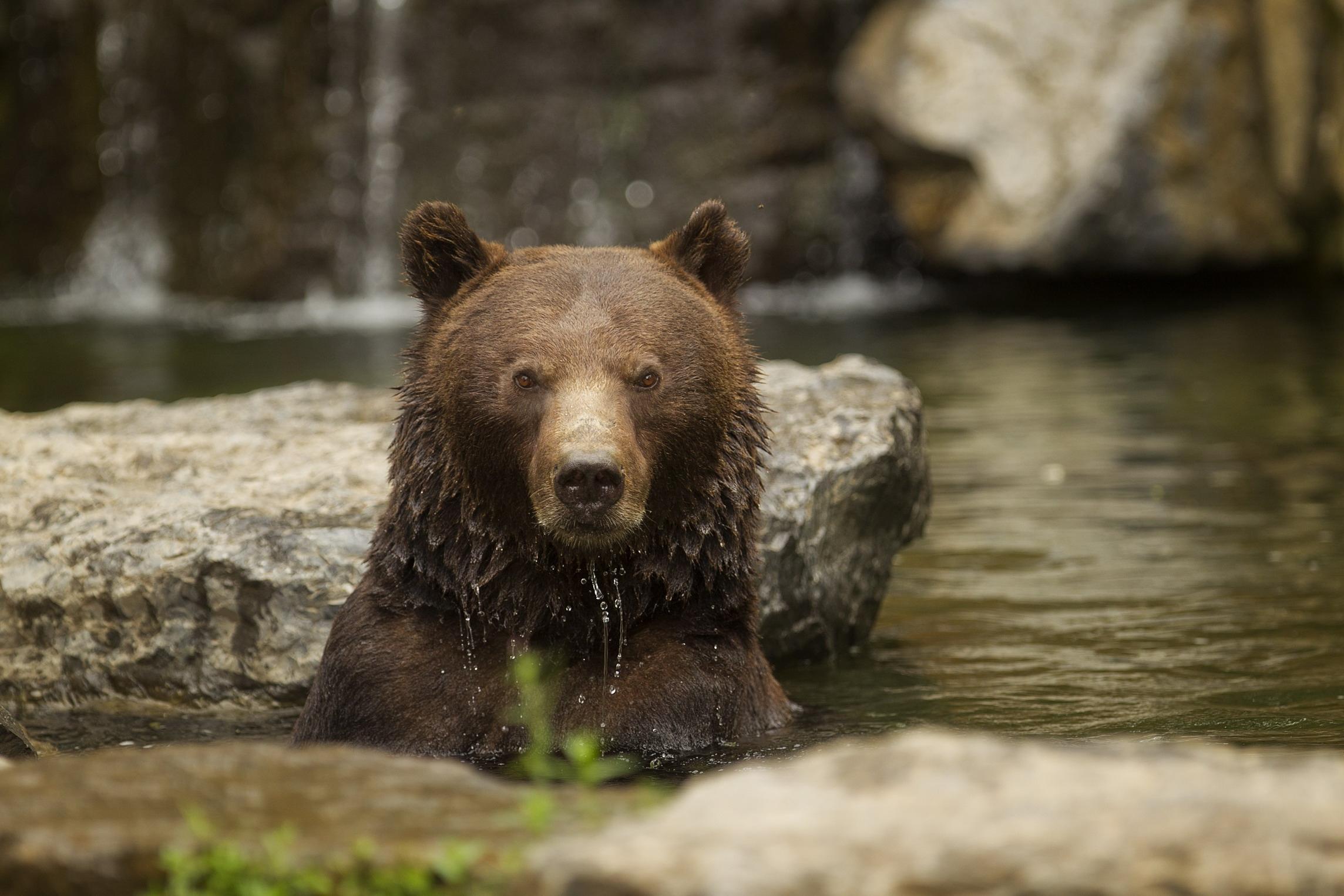 Je Te Dis Que L'ours Hiverne tout Animaux Qui Hivernent