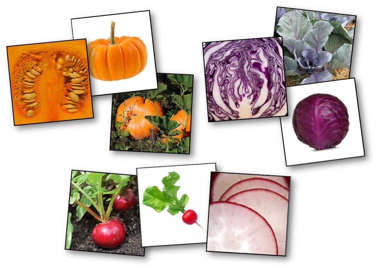 Jeu De Mémory Des Fruits Et Légumes : Détails Et Plantations dedans Jeux De Fruit Et Legume Coupé
