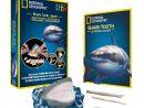 Kit De Fouille Dents De Requins tout Requin Jeux Gratuit