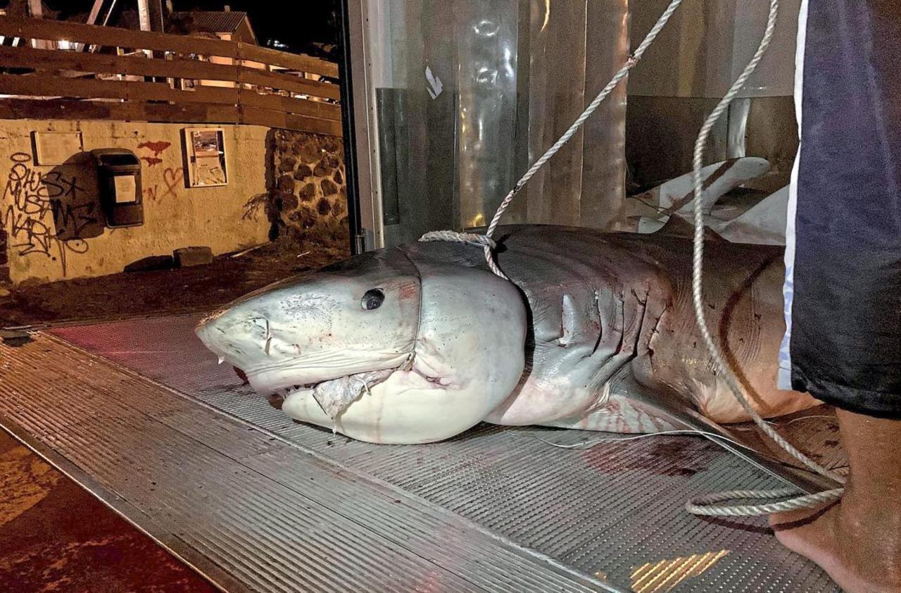 La Réunion : Une Main Et Un Avant-Bras Retrouvés Dans Le à Requin Jeux Gratuit
