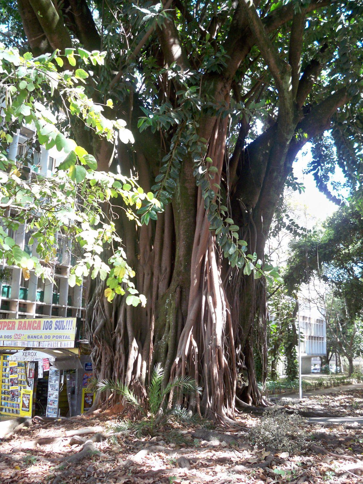 L'arbre Magique - Brasilia - La Bernerie En Retz serapportantà Arbre Magique Voiture Personnalisé