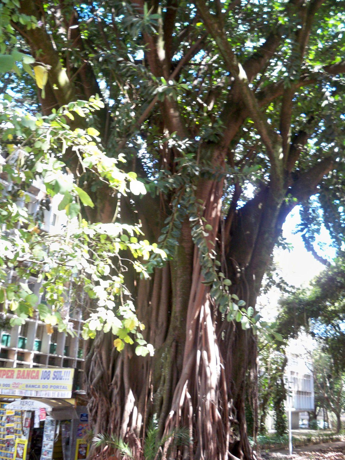 L'arbre Magique - Brasilia - La Bernerie En Retz tout Arbre Magique Voiture Personnalisé