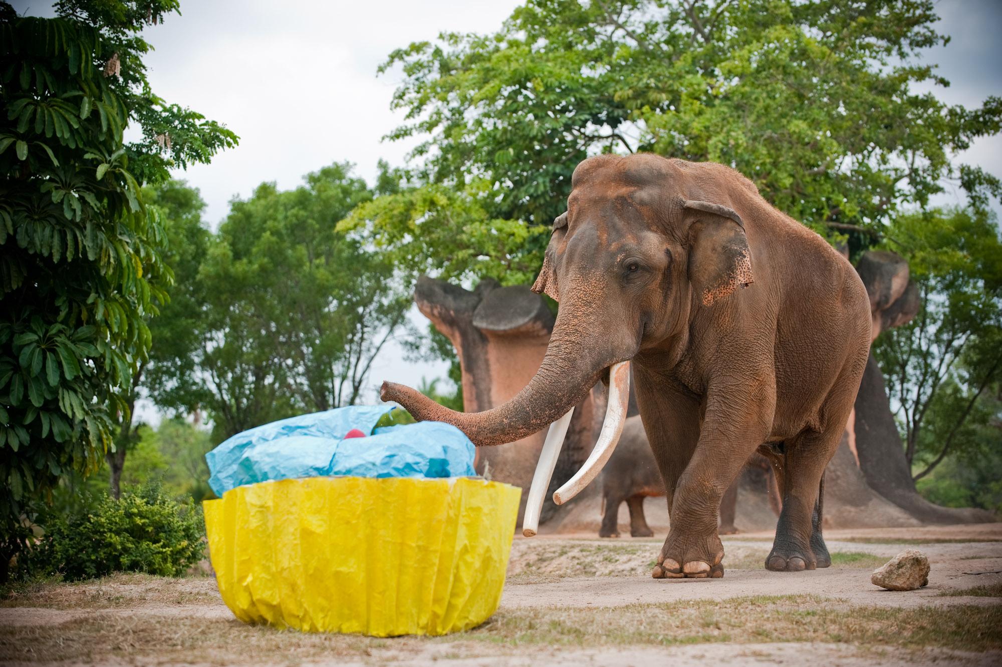 Le 50Ème Anniversaire De Dalip! | Destination Soleil destiné Femelle De L Éléphant Nom