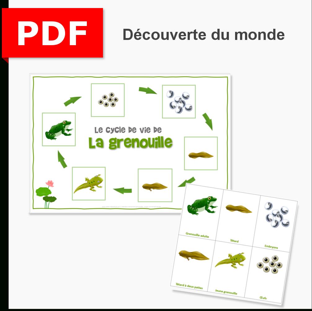 Le Cycle De Vie De La Grenouille intérieur Cycle De Vie Grenouille