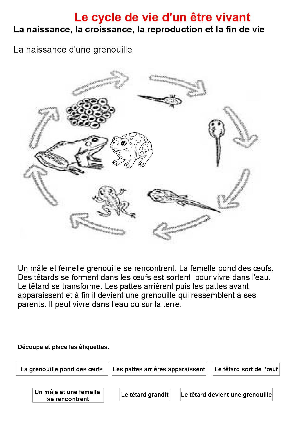 Le Cycle De Vie Des Êtres Vivants - Prepecole Pour La Classe destiné Le Cycle De Vie De La Grenouille