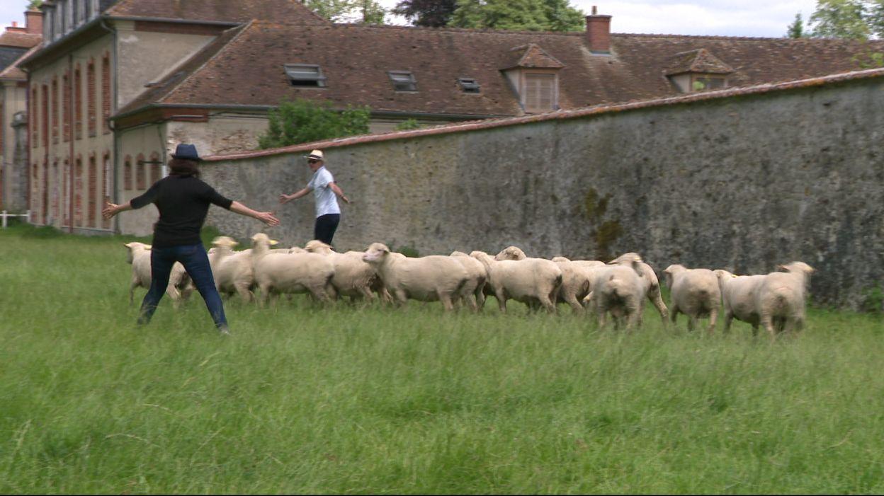 Le Sheep Coaching: Les Cadres Sont-Ils Des Moutons? à Différence Entre Brebis Et Mouton