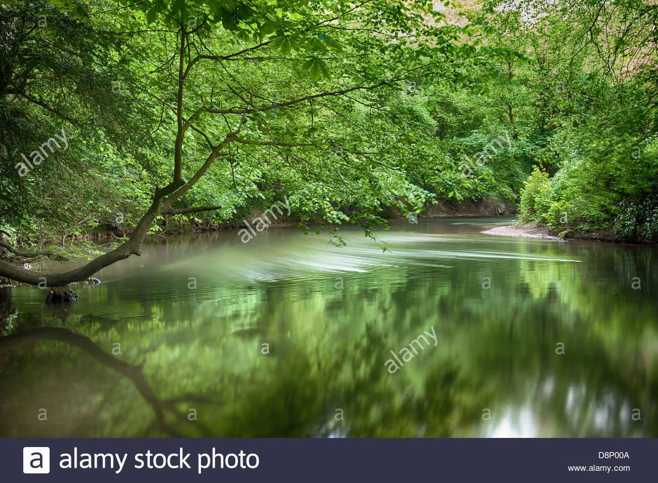 L'eau Douce De La Rivière Qui Coule Une Paisible Cachée dedans Arbre A Taupe