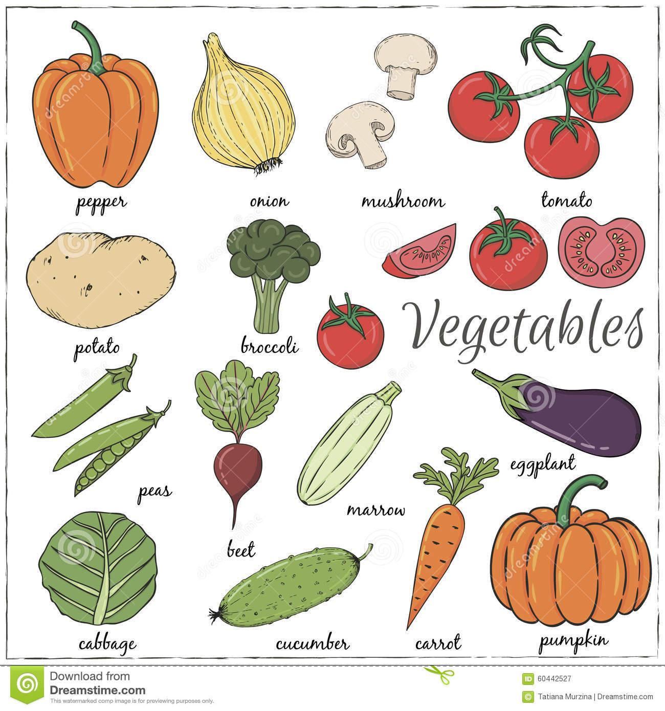 Légumes Tirés Par La Main Avec Le Nom Illustration Stock intérieur Nom De Legume