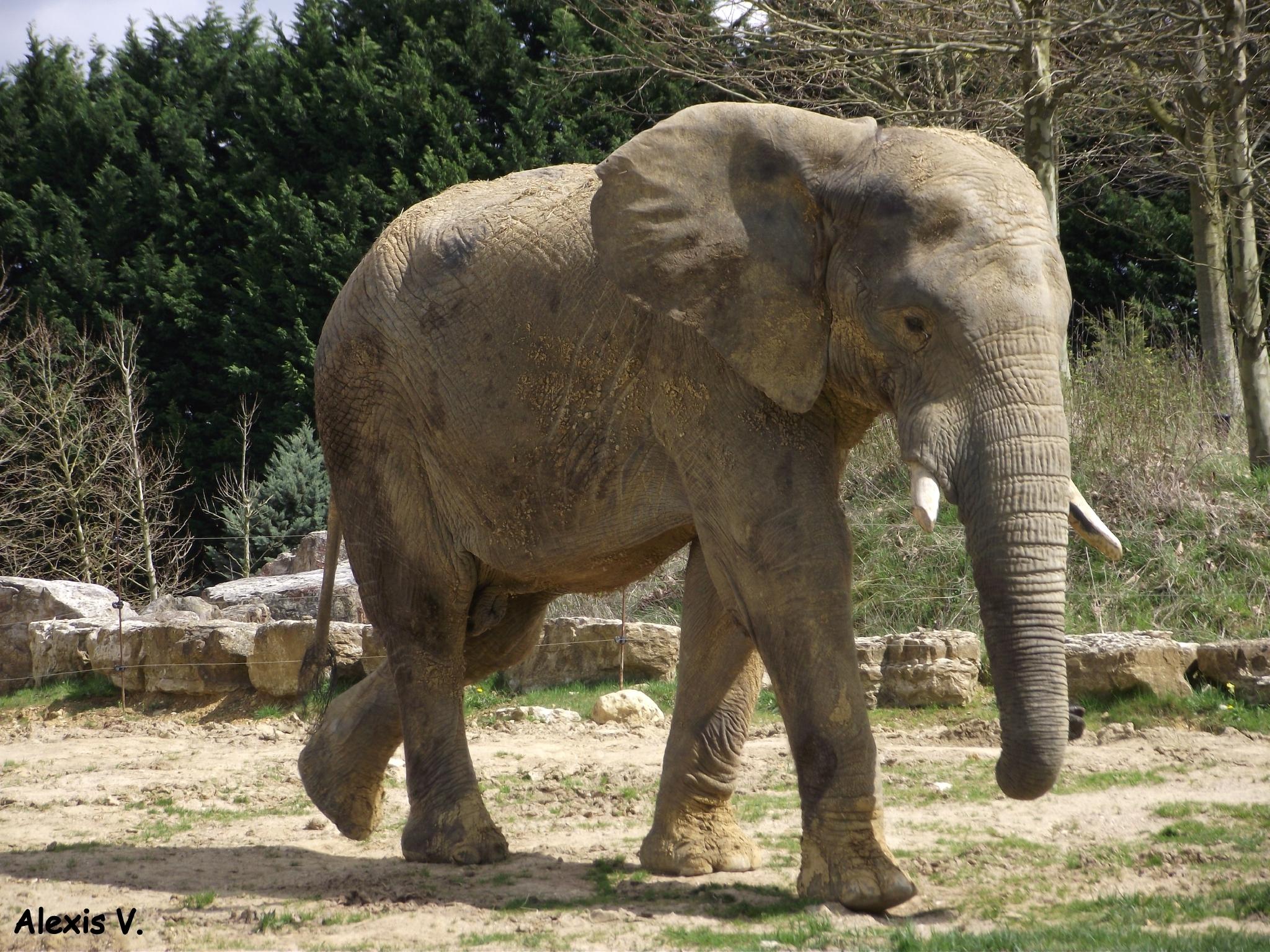 Femelle De L Éléphant Nom - PrimaNYC.com