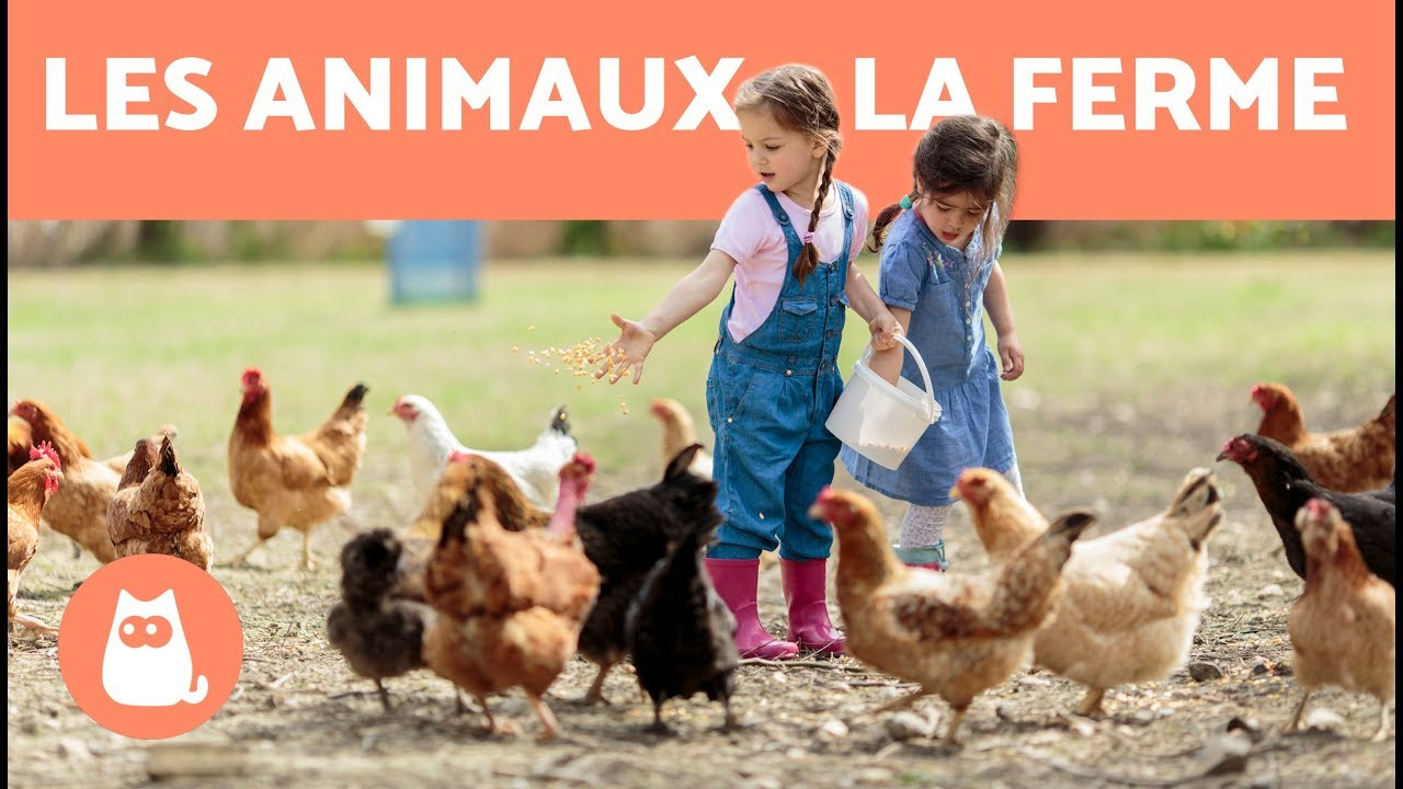 Les Animaux De La Ferme - Leur Cri, Leurs Petits, Leur Famille concernant Bruit Des Animaux De La Ferme