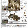Les Animaux De La Forêt | Animaux Foret, Animaux, Le Cri Des destiné Animaux Foret Maternelle