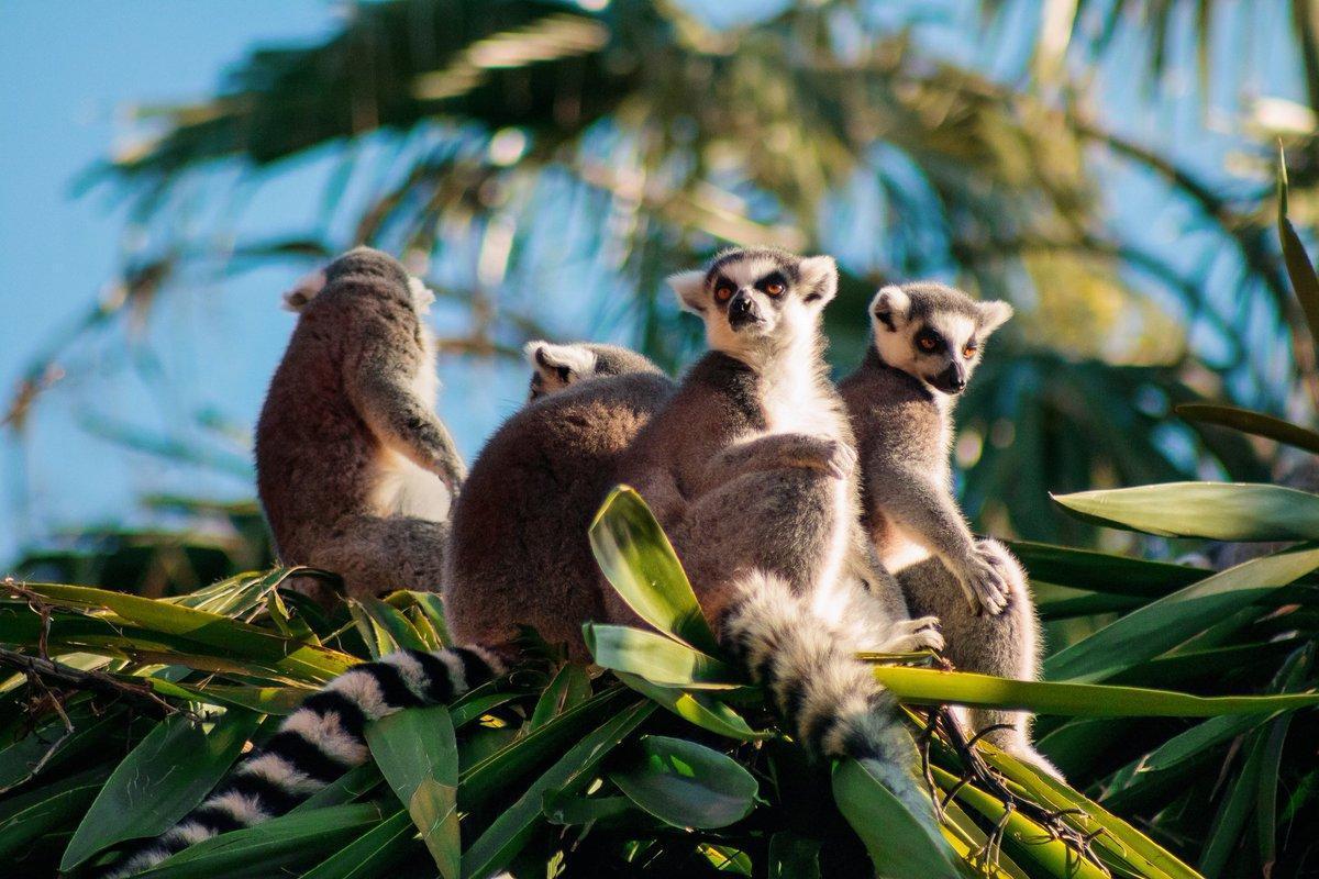 Les Animaux De Madagascar - Nom, Liste Et Photos - 15 Exemples ! destiné Animaux Ovipares Liste