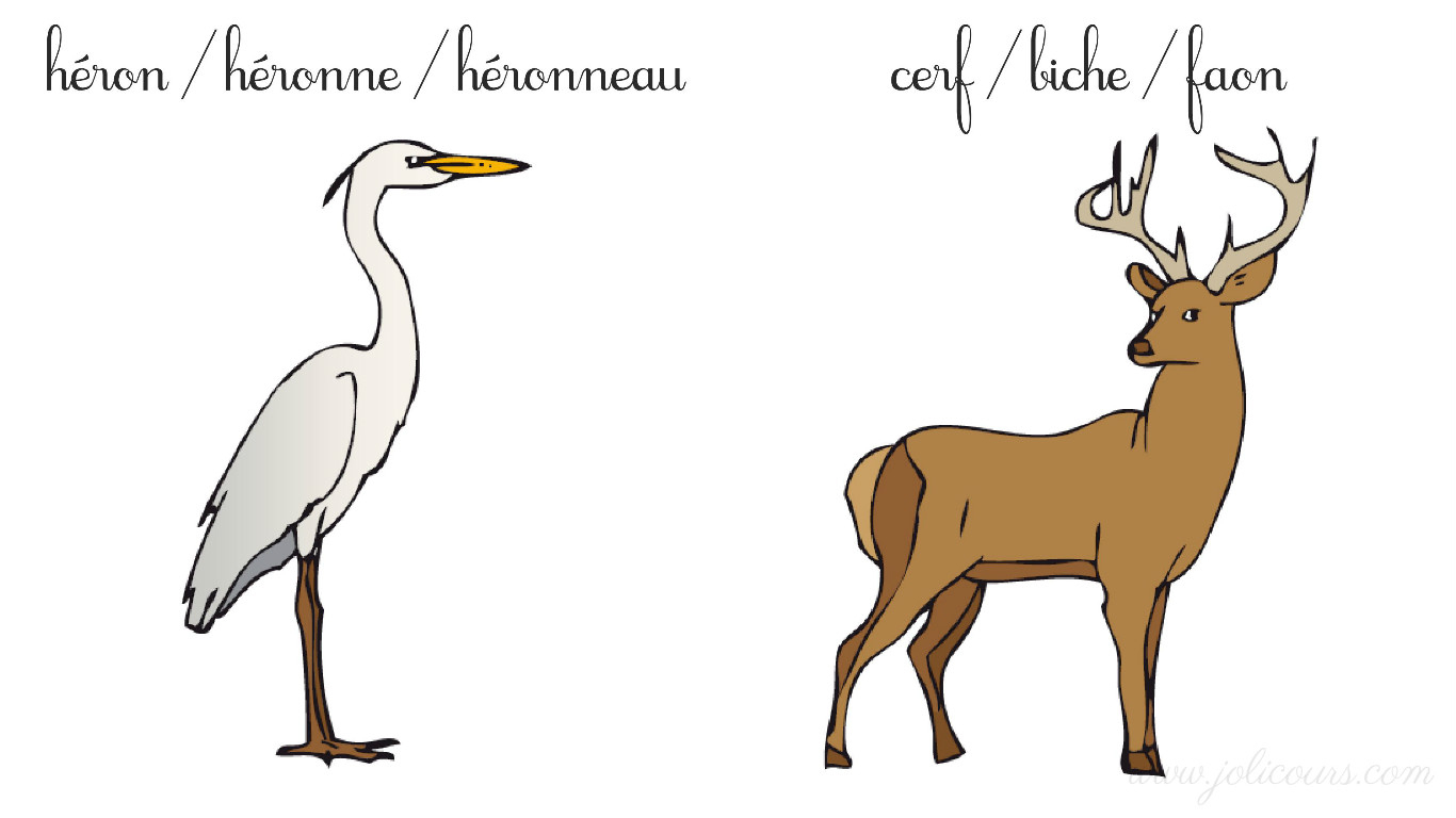 Les Animaux : Le Mâle, La Femelle Et Le Petit – Le Blog De dedans Femelle De L Éléphant Nom