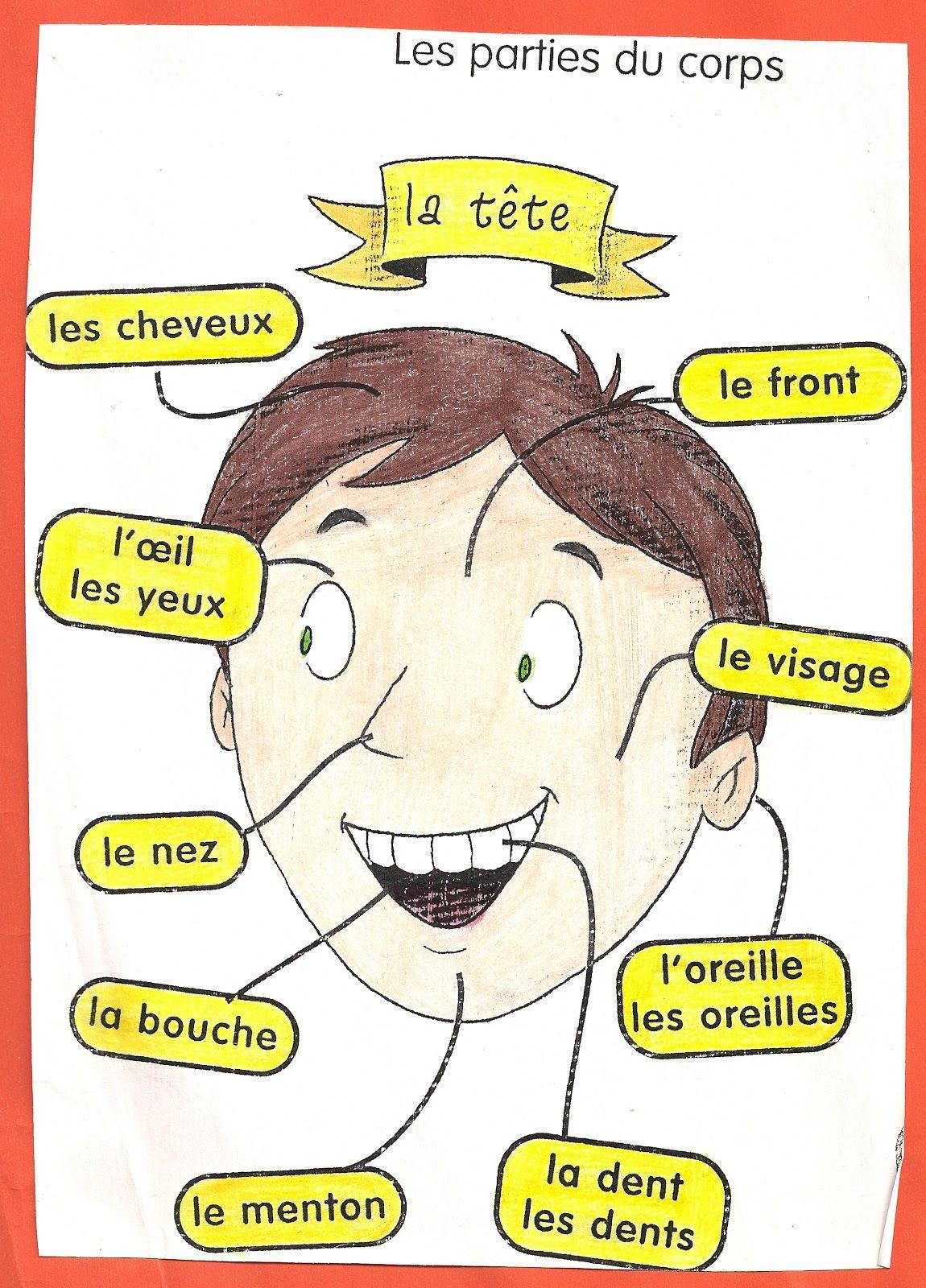 Les Parties Du Corps   Apprendre Le Français, French encequiconcerne Apprendre Les Parties Du Visage